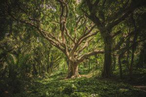 Jak komunikować się z drzewami tak jak to robią szamani?