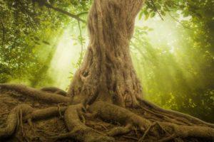 Drzewo pragnień: przypowieść, która pokazuje nam, jak sabotujemy nasze życie.